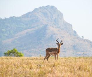 Mlilwane Wildlife Reserve