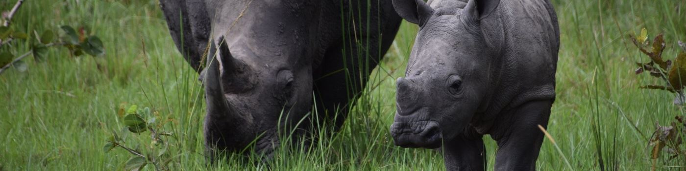 Mike Collins' rhino in Uganda