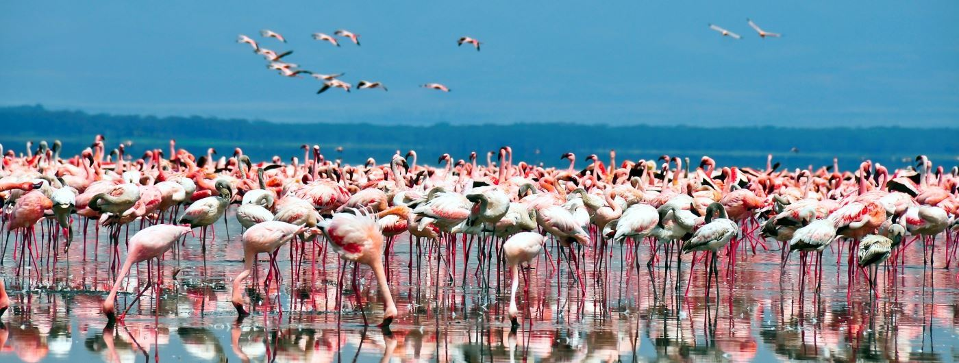 Flamingo by Lake Nakuru - getty