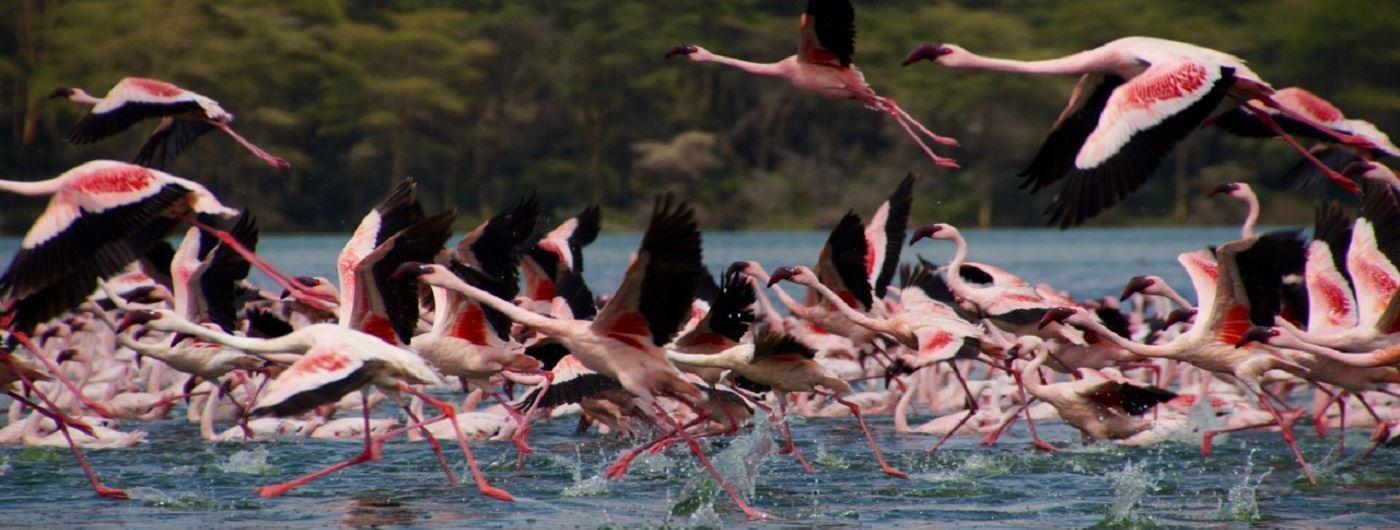Loldia House flamingos at Lake Nakuru