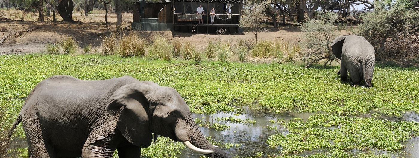 Old Mondoro elephant by guest tent