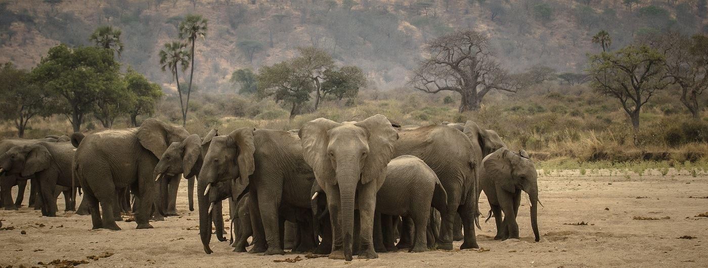 Elephant in Ruaha National Park - Paul Joynson Hicks