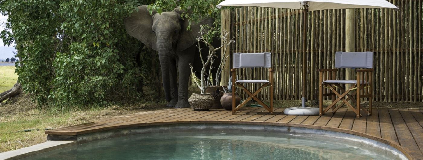 Ruckomechi Camp elephant by the pool