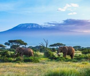 Getty image of Amboseli