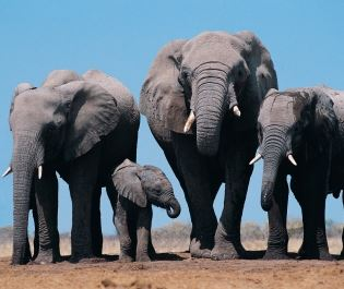 Etosha National Park elephants - Getty
