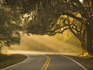 Misty road near Savannah, Georgia