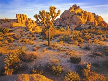 A beginner's guide to Joshua Tree National Park