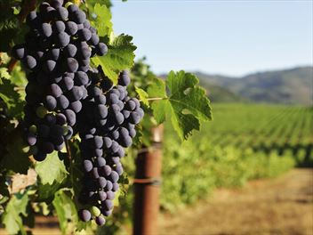 Exploring California's Wine Country destinations