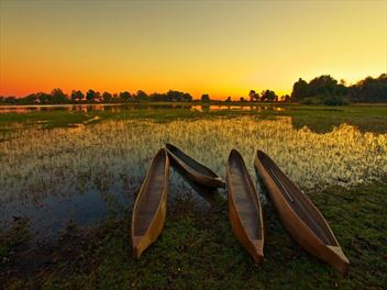 Explore the Okavango Delta