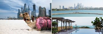 Dubai Camel, Beachscapre, JA Ocean View Infinity Pool
