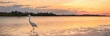 Marco Island, Tigertail Beach