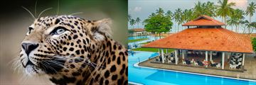 Leopard Safari and Club Hotel Dolphin