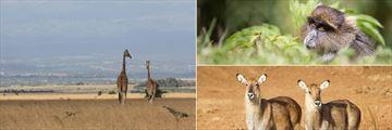 Aberdare National Park wildlife