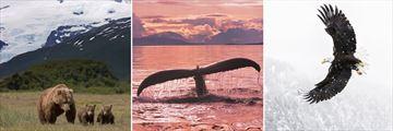 Alaskan wildlife sightings