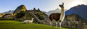 Alpacas and the enchanting Machu Picchu, Peru