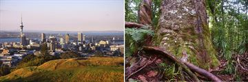 Auckland Cityscapes & Famous Kauri Trees in the Forests