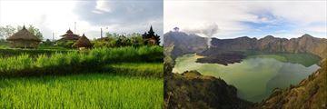 Bali Rice Fields and Ranjani Lombok