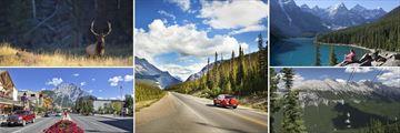 Amazing scenery and wildife in Banff, Alberta
