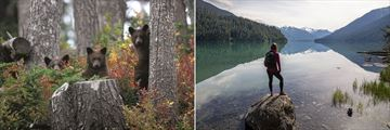 Wildlife in Whistler Mountain and Cheakamus Lake