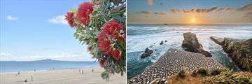 Beautiful Beach Scenery & Muriwai Beach Gannet Colony