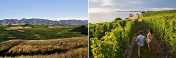 Blenheim Vineyards & Wine Tour, Marlborough Region