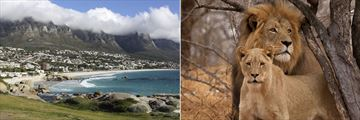Camps Bay, Cape Town & Lions of Kruger