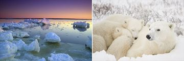 Churchill Landscapes & Polar Bears