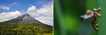 Arenal Volcano and Red-Eyed Tree Frog, Costa Rica