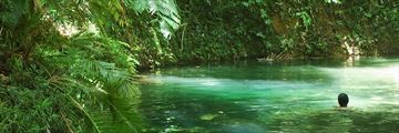 Swimming in the Daintree Rainforest