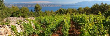 Dalmatian vineyard in Hvar