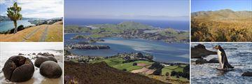 Dunedin, Moeraki Boulders, Omarama Hills & Native Penguins