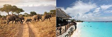 Tanzania elephant herd & Zanzibar beachfront