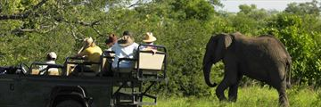 Discovering elephants on a game drive in South Africa