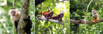 Monkey Species in Costa Rica