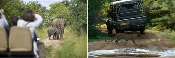 Game Drive wildlife spotting