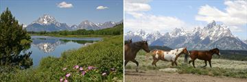 Grand Teton National Park & Wild horses in Jackson Hole