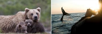 Grizzly Bear & Whale Sightings in Canada