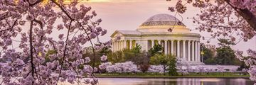 Jefferson Memorial and cherry blossom in Washington DC