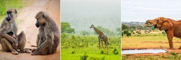 Tsavo National Park wildlife