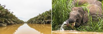 Kinabatangan River Experience, Borneo