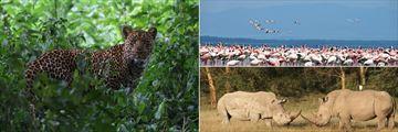 Lake Nakuru National Park's fascinating wildlife