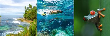 Manzanillo beach, snorkelling & wildlife