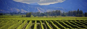 Sweeping vineyards in Marlborough