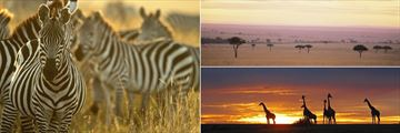 Masai Mara landscapes, zebras and giraffes