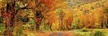 Autumnal colours in Massachusetts