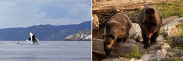 Orca & Grizzly Bear sightings in Canada