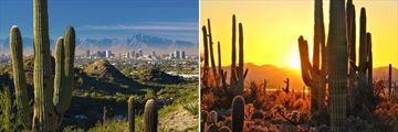 Phoenix & Scottsdale