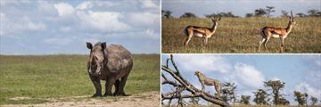 Porini Rhino Camp
