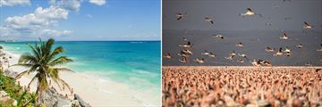 Pristine Mexican Beachscape & Flock of Flamingos