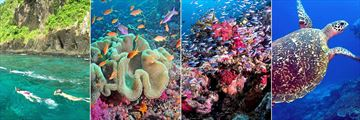 Snorkeling and Scuba Diving at Qamea Resort & Spa Fiji